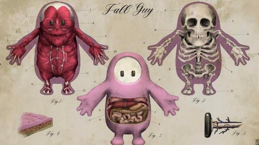 Fall Guys zijn redelijk groot, anatomie onthuld