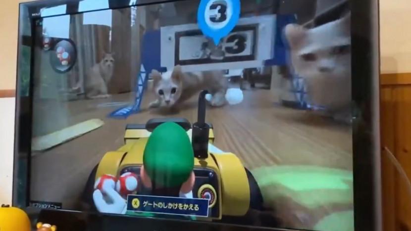 Mario Kart Live en katten zijn de perfecte combinatie, of niet?