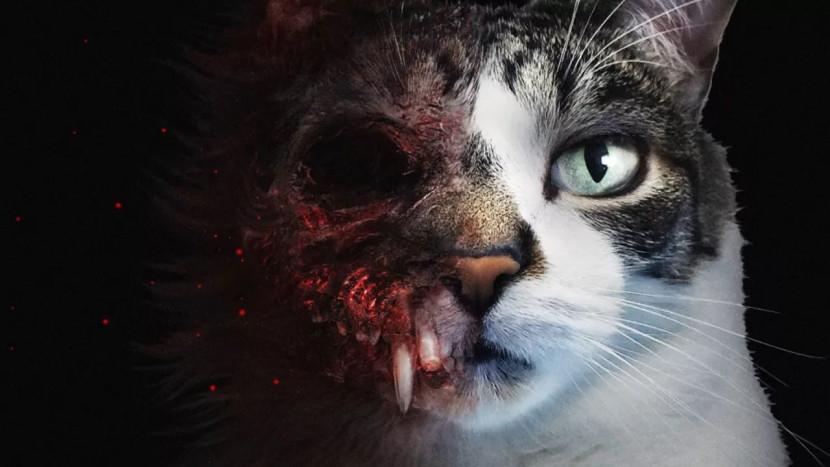 In deze horrorgame speel je een kat genaamd Biscuit