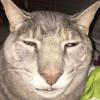 saimonny avatar